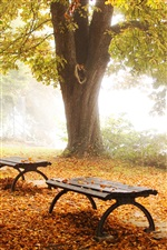 Nature park, fall foliage iPhone wallpaper