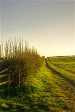 Nature scenery, green, meadow, grass, fence iPhone wallpaper