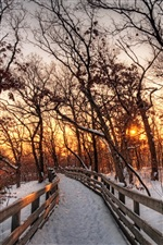 Nature winter landscape, snow, forest, trees, path, sunset iPhone wallpaper