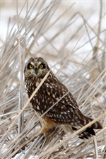 Owl in the grass at winter iPhone wallpaper