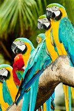 Parrots lined up to stand iPhone wallpaper