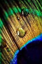 Peacock feather, water drops, macro photography iPhone Wallpaper
