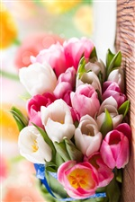Pink and white tulip flower bouquet iPhone wallpaper