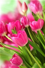 Pink flowers, bouquet tulips iPhone wallpaper