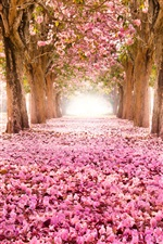 Pink indus flowers, path, trees, beautiful scenery iPhone wallpaper