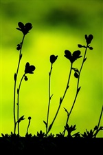 Plants leaves macro, black silhouettes iPhone wallpaper