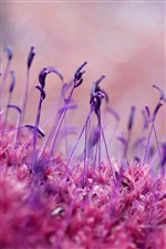 Purple plant germination iPhone wallpaper