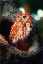 Red feather owl in the forest iPhone wallpaper