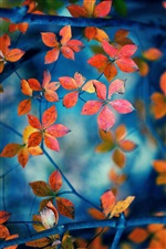 Red leaves, branches, autumn iPhone Wallpaper