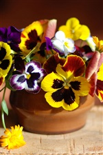 Pansy flowers and calendula iPhone wallpaper