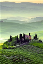 Pienza, Tuscany, Italy, spring morning scenery, fields, trees iPhone wallpaper