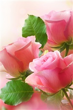 Pink roses, green leaves, bokeh photography iPhone Wallpaper