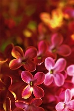 Red lilac macro photography iPhone wallpaper