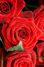 Romantic red roses iPhone Wallpaper