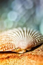 Seashell close-up, bokeh iPhone wallpaper