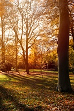 Trees, autumn, park, sunset, shadow iPhone wallpaper