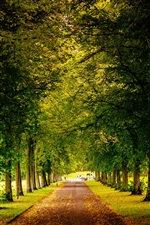 Sheffield, England, park, trees, road, autumn iPhone wallpaper