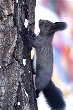 Squirrel climbing to the tree, winter snow iPhone Wallpaper