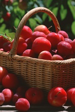A basket red plums iPhone wallpaper
