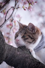 Cat in the tree, spring iPhone Wallpaper