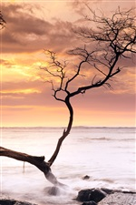 Sea, coast, tree, sunset, Hawaii, USA iPhone wallpaper