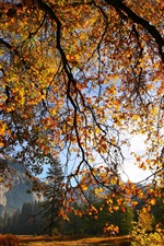Autumn, tree, branches, leaves, sun iPhone wallpaper