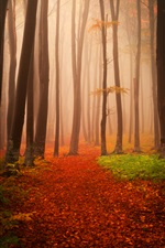 Autumn, trees, fog, forest iPhone wallpaper
