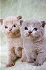 Kittens, twins iPhone wallpaper