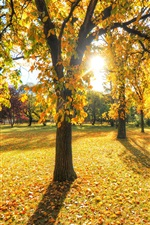 Park, trees, grass, leaves, autumn, sunset iPhone wallpaper