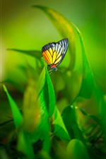 Butterfly, wings, plant, green leaves iPhone Wallpaper