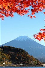 Japan, mount Fuji, lake, trees, leaves, autumn iPhone wallpaper