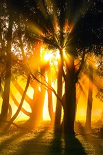 Morning, fog, trees, sun rays iPhone wallpaper