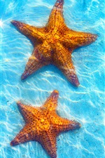 Sea, blue water, starfish iPhone wallpaper