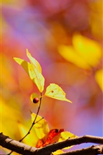 Yellow leaves, autumn iPhone wallpaper