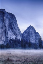 Yosemite National Park, USA, trees, mountains, fog iPhone wallpaper