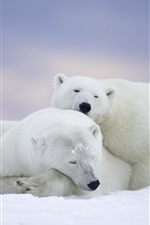 Alaska, polar bears, sleep, snow iPhone Wallpaper