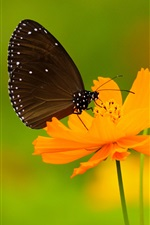 Black butterfly, wings, yellow flowers iPhone Wallpaper