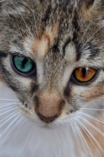 Cat face close-up, two colors eyes iPhone wallpaper