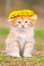 Cute fluffy kitten, wreath, yellow flowers iPhone wallpaper