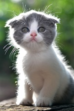 Cute kitten, backlit iPhone wallpaper