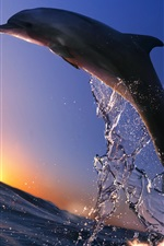 Dolphin jump, sea, sunset, splash iPhone wallpaper