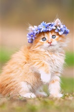 Fluffy kitten, blue flowers, wreath iPhone Wallpaper