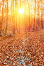 Forest, sun rays, autumn, yellow leaves iPhone Wallpaper