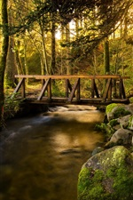 Forest, trees, bridge, creek, stones iPhone wallpaper