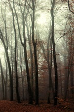 Forest, trees, mist, autumn iPhone wallpaper