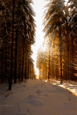Germany, winter, snow, forest, sun rays iPhone wallpaper