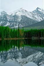 Herbert Lake, Banff National Park, mountain, trees iPhone wallpaper