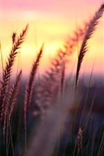 Plant macro, foliage, grass, sunset, sun, blur iPhone wallpaper