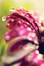 Purple flower, petals, water drops iPhone wallpaper
