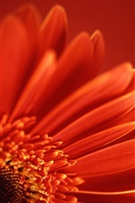 Red flower petals close-up, macro photography iPhone wallpaper